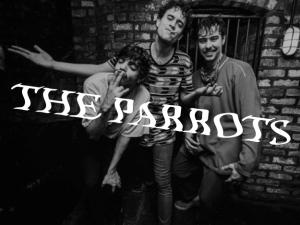 the-parrots-portfolio